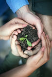 Hands surround of soil with plant Stock Photography