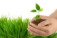 Hands take care of small plant Stock Photos