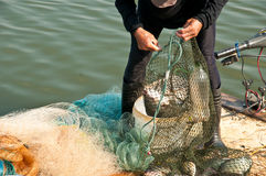 Hands take fish Royalty Free Stock Photos