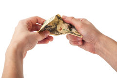 Hands tear money Royalty Free Stock Photos