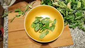 Hands tearing basil to bowl. Unrecognizable woman tearing basil leaves to bowl while cooking stock video footage