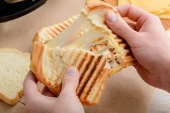 Hands tearing a sandwich. In two. Crunch of grilled bread and melted cheese pull. Yummy snack for a lunch royalty free stock images