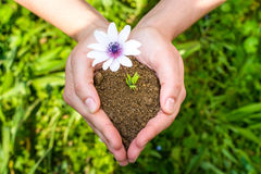 Hands tending a flower. In the earth Stock Image