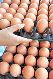 Hands are to lift input container egg. Royalty Free Stock Photo