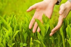 Hands touching green grass