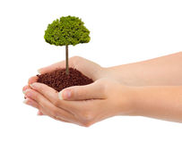 Hands and tree Stock Image