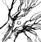 Hands of tree. Drawing of a tree, design for card, background, cover, t-shirt Royalty Free Stock Photo