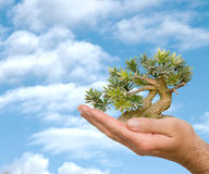 Hands with tree Royalty Free Stock Images