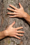 Hands on tree Stock Images