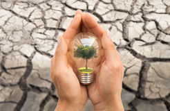 Hands with tree inside light bulb over dry ground stock photos