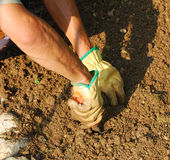 Hands Turning Soil Stock Photography