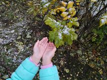 Hands. Two hands in winter forest Royalty Free Stock Images