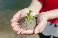 Hands Up blue and green lake. Manos tomando una planta en pleno crecimiento Stock Photography