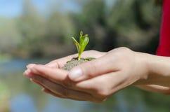 Hands Up blue and green lake. Manos tomando una planta en pleno crecimiento Royalty Free Stock Images