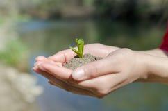 Hands Up blue and green lake. Manos tomando una planta en pleno crecimiento Stock Image