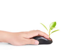 Hands using  mouse with  plant Royalty Free Stock Image