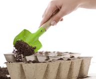 Hands Using Shovel Placing Soil into Compost Pots. Hands using a green shovel to place soil from a silver pail into eco-friendly Composted Cow Manure Pots used Stock Image