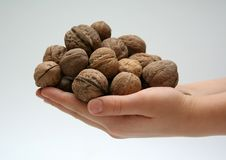 Hands with walnuts Royalty Free Stock Images