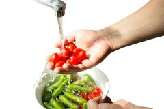 Hands washing fresh cherry tomatoes in running water isolated. In white background royalty free stock photography