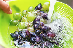 Hands washing a fresh grapes. Under the tap royalty free stock photo