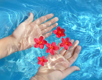 Hands in a water. Hands with flower in a water Stock Images