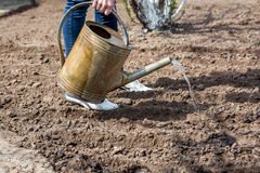 Hands with watering can in action Royalty Free Stock Photography