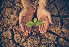 Hands watering a tree on cracked earth Stock Photos