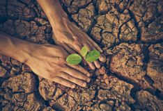 Hands watering a tree on cracked earth Royalty Free Stock Images