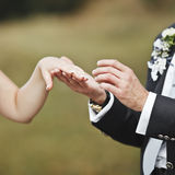 Hands of wedding couple putting golden rings Royalty Free Stock Photos