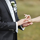 Hands of wedding couple putting golden rings Stock Image