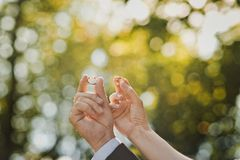 Hands with wedding rings 1622. Royalty Free Stock Photo