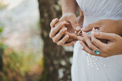 Hands with wedding rings 1603. Royalty Free Stock Photo