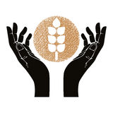 Hands with wheat vector symbol. Stock Image