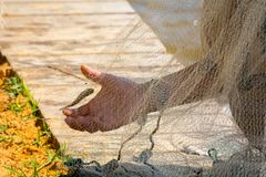 Hands which Collect Small Fish Captured by a Fishnet. On Blur Background royalty free stock photos