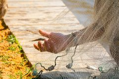 Hands which Collect Small Fish Captured by a Fishnet. On Blur Background stock photography