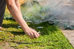 Hands which Collect Small Fish Captured by a Fishnet. On Blur Background stock photo