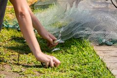 Hands which Collect Small Fish Captured by a Fishnet. On Blur Background royalty free stock images