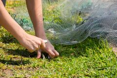 Hands which Collect Small Fish Captured by a Fishnet. On Blur Background royalty free stock photography