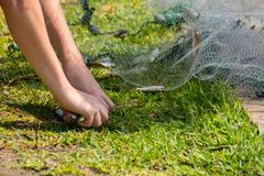 Hands which Collect Small Fish Captured by a Fishnet. On Blur Background stock images