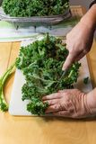Hands wielding a knife cutting the spines from kale leaves, vert. Ical aspect. Cutting the tough ribs from the leaves of kale make it more palatable Royalty Free Stock Image