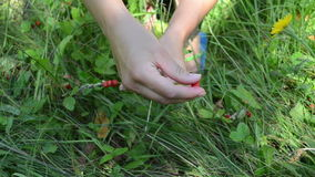 Hands wild berry swing Stock Image
