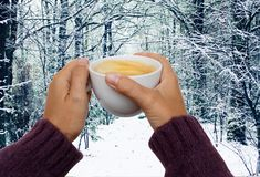 Hands with winter coffee Stock Image
