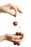 Hands With Cherries Stock Photos