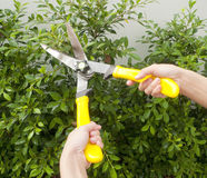 Hands With Garden Shears Cutting Stock Images