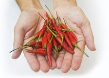 Hands With Peppers Stock Image