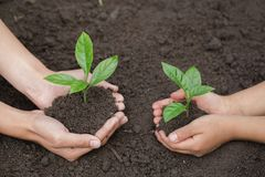 The hands of the woman and child to plant the seedlings in the soil, plant a tree, reduce global warming, World Environment Day. Ecology concept stock image