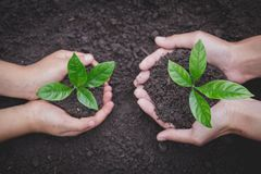 The hands of the woman and child to plant the seedlings in the soil, plant a tree, reduce global warming, World Environment Day. Ecology concept royalty free stock photos