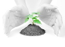 Hands of woman and green sprout Royalty Free Stock Photography