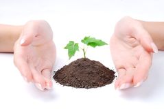 Hands of woman and green sprout Royalty Free Stock Photo