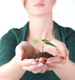 Hands of woman and green sprout Stock Image